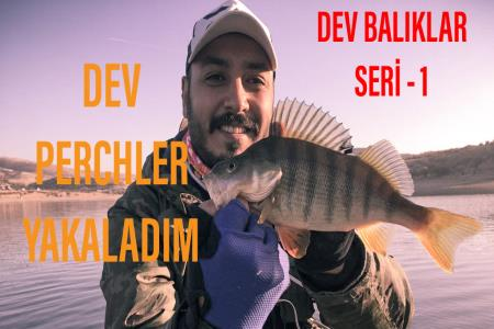 ANKARA PERCH AVI - DEV PERCHLER YAKALADIM